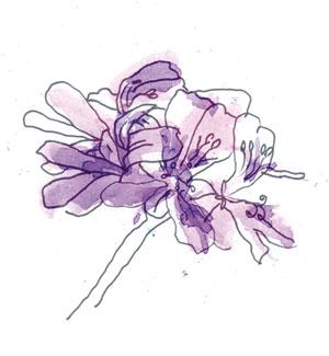 https://www.lavender.co.il/wp-content/uploads/2019/05/13-6.jpg
