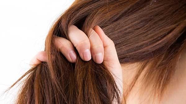 רוקחות טבעית – קרם לחות טבעי לשיער-לבנדר קוסמטיקה טבעית