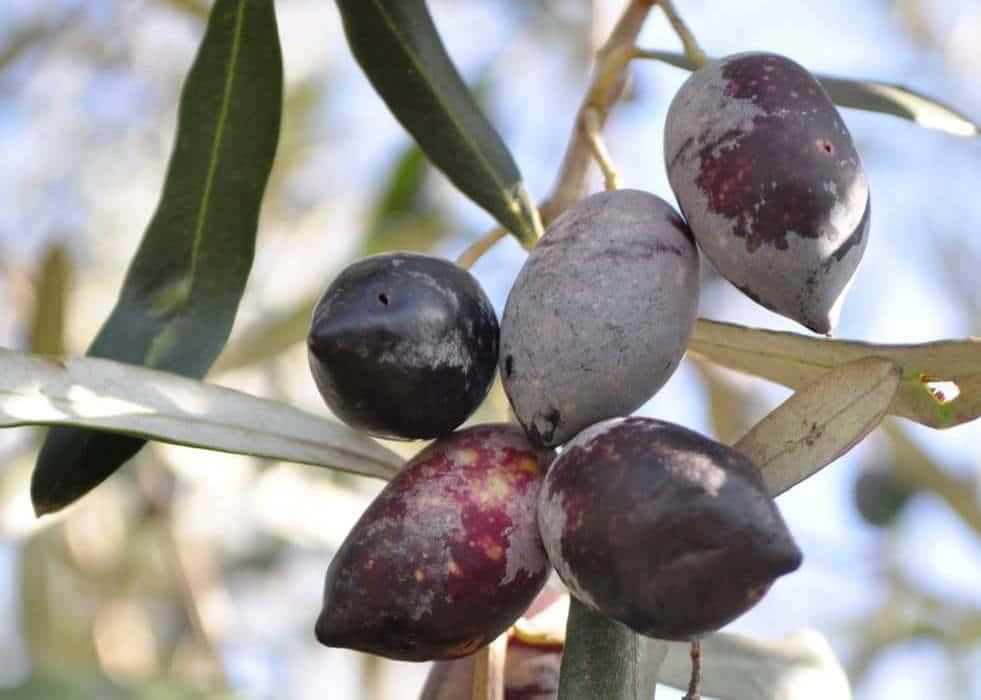 סבונים נוזליים טבעיים משמן זית - לבנדר קוסמטיקה טבעית