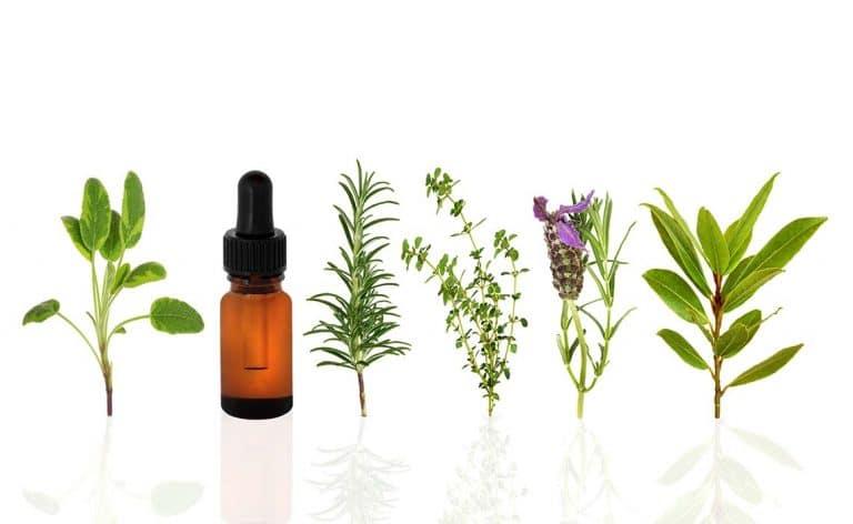 טיפול טבעי באלרגיה אביבית - לבנדר קוסמטיקה טבעית
