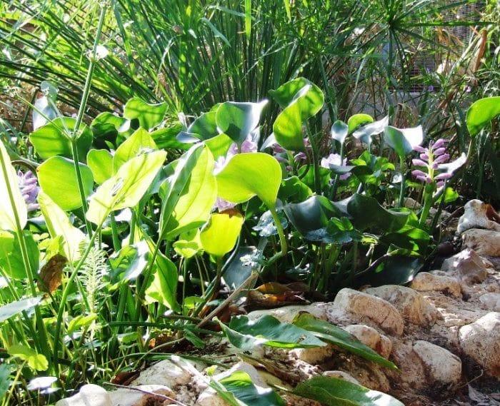 מערכת מים אפורים - לבנדר קוסמטיקה טבעית